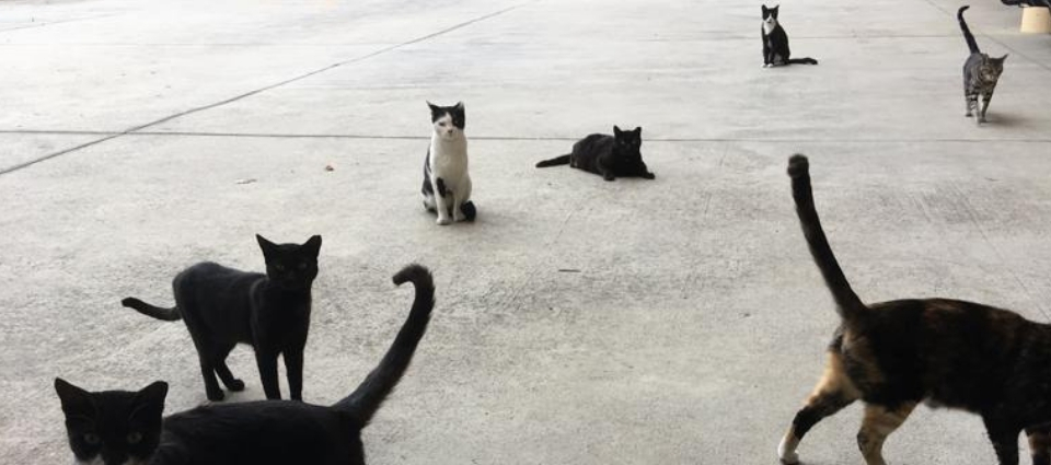 7 cats spread across the image in different positions, all goign about their own business - as cats do.
